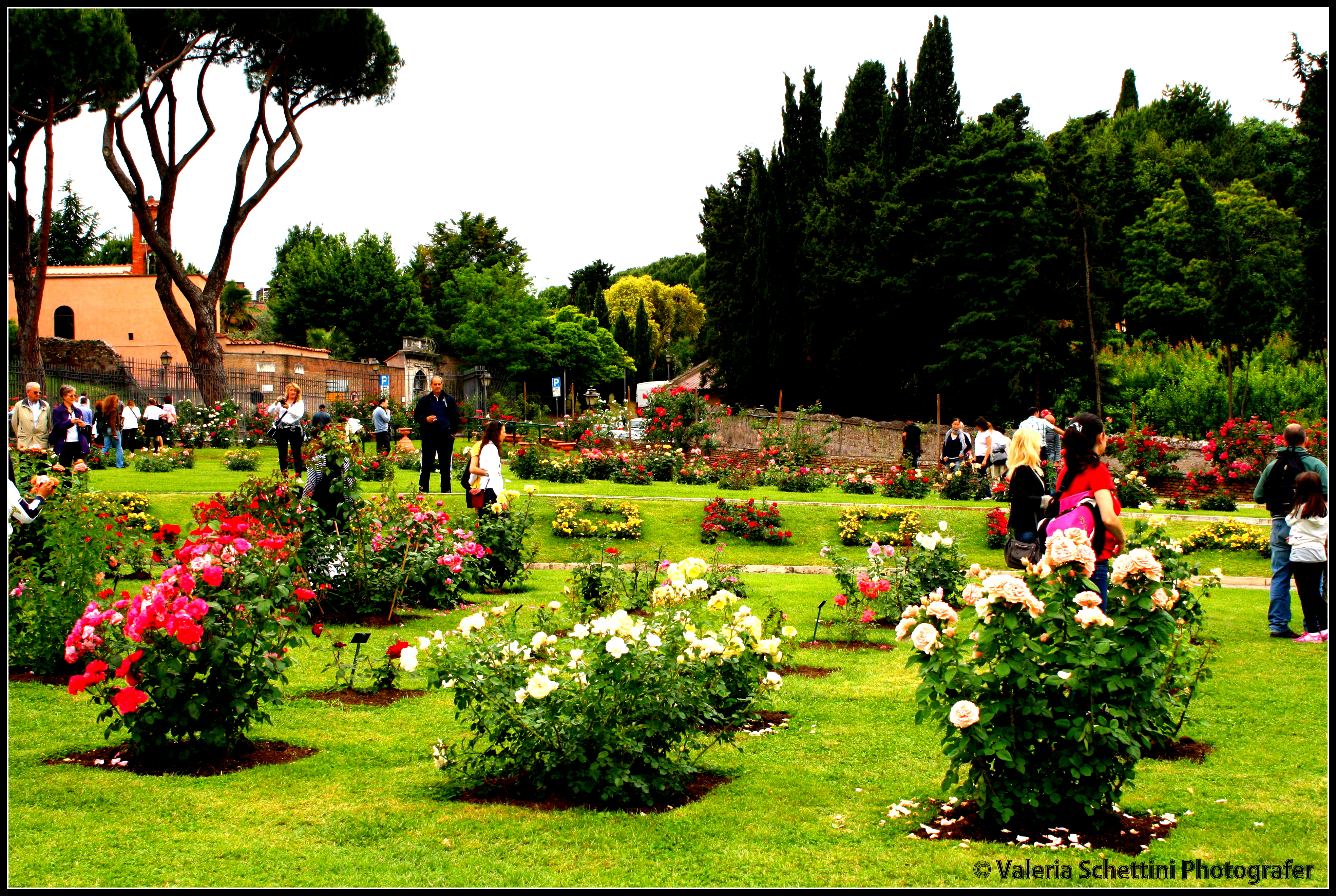 Rose rosse allaricercadelviaggioperduto - Giardino con rose ...